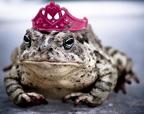 Frog Prince Charming