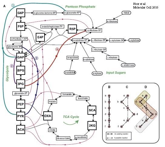 La Ciencia explicada: ¿Cómo se organiza el metabolismo?