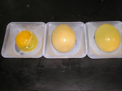 Egg-cellent Experiment ….Day 2   Pangburn's Posts