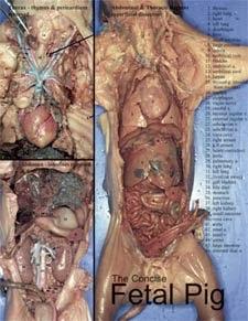 Concise Fetal Pig