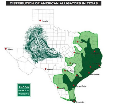 Texas Cryptid Hunter: Alligators in Bell County