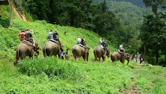 Paseo en elefante por Chiang Mai