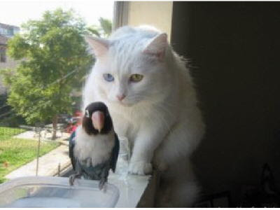 cat and bird, cant eat bird, cat attack bird