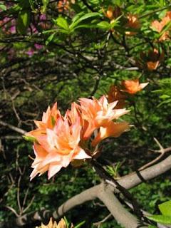 azaleadalen slottsskogen göteborg