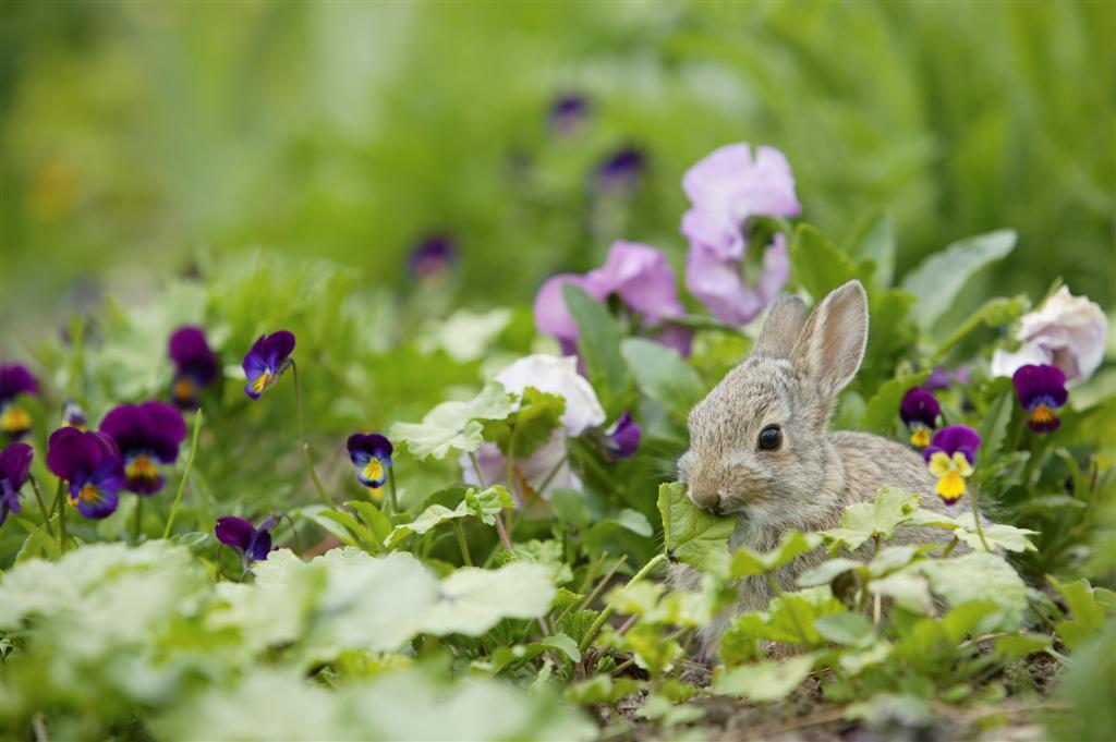 The Garden Plot Ban Bunnies Amp Deer From Your Garden