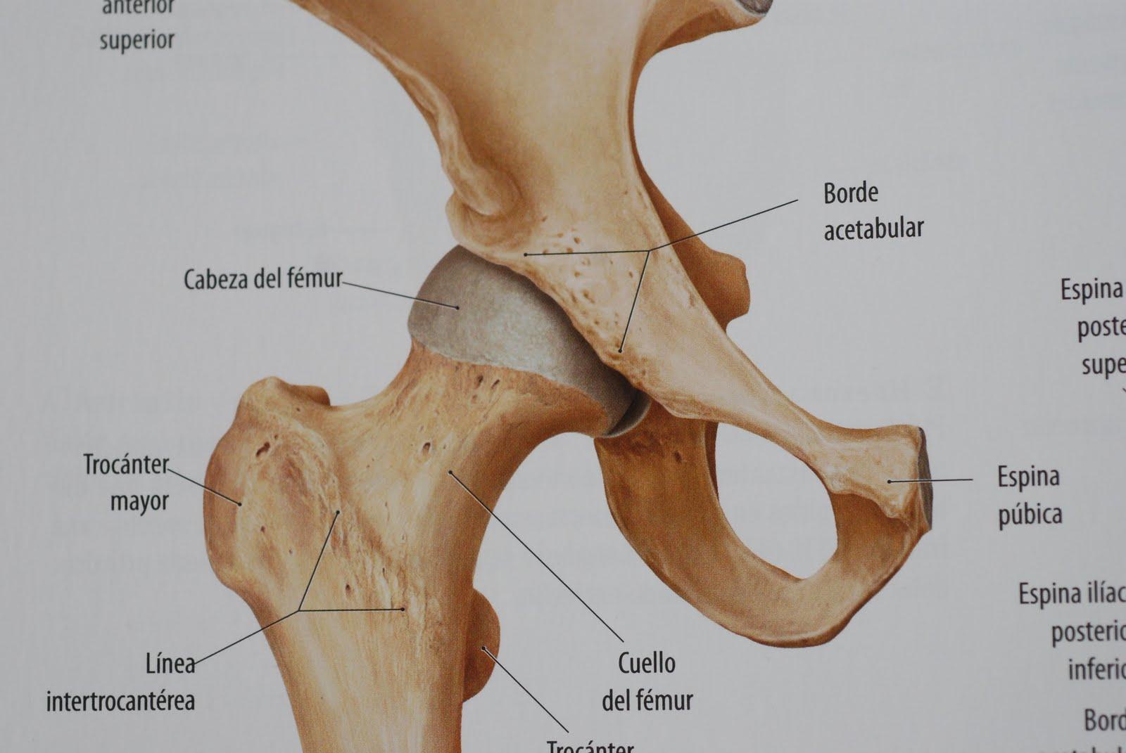 dolor sordo en la cadera superior derecha