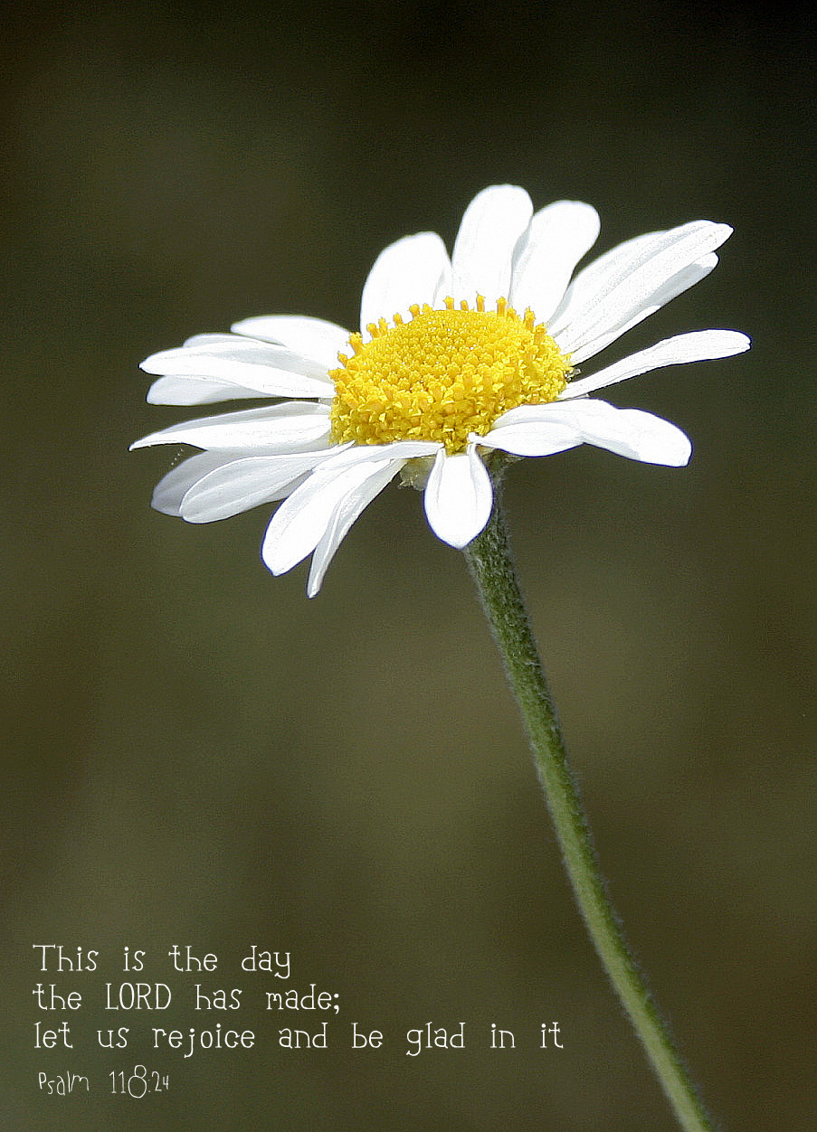 Sweet Gift For Her: Daisies This Is The Day The Lord Has Made