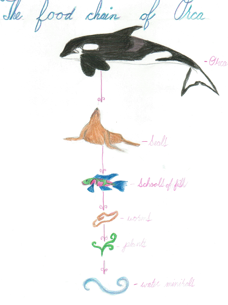 Gray Whale Food Chain