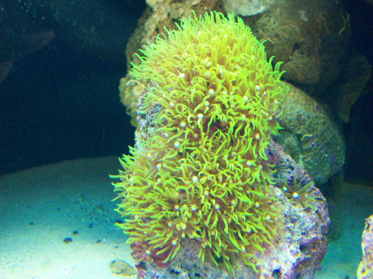 corales blandos para principiantes
