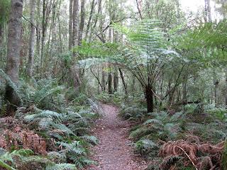 Ferntree gully melbourne
