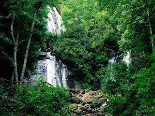 selva+medio ambiente+ecologia