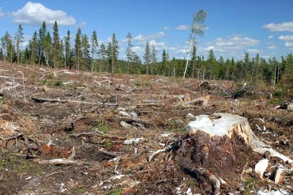 Truly Shocking Facts About Deforestation You Simply Can't Ignore