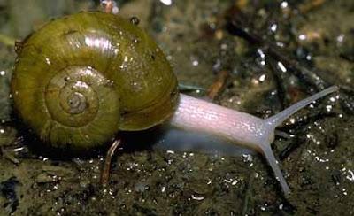 Module 11:  The Invertebrates Of Kingdom Animalia