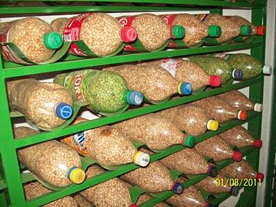 Resultado de imagem para cultivo de feijão e milho em almino afonso rn