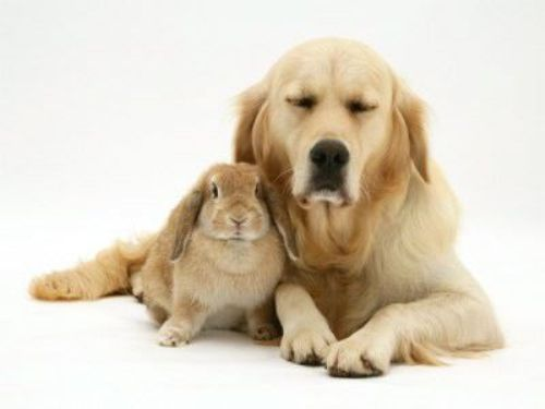 Cute%20Easter%20Animals03.jpg