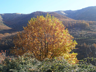 autumn in the jerte valley