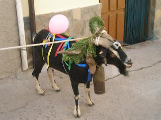 fiesta popular en el valle del jerte