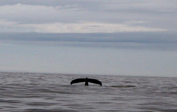 voir des baleines à tofino au canada