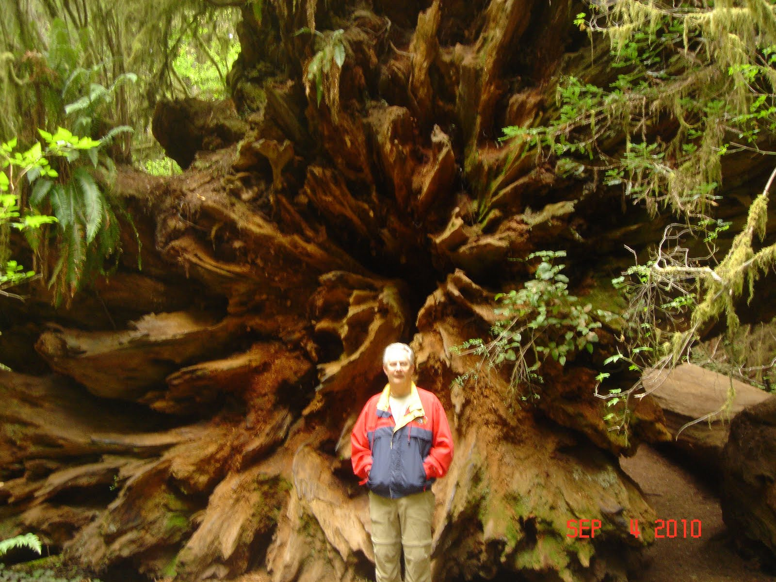 Life In The Slow Lane The Redwood Forest In California