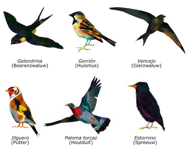 Wonderlijk Spanje-blog: Vogelsoorten in Spanje XX-06