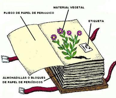 herbario, manualidades mágicas, libros plantas