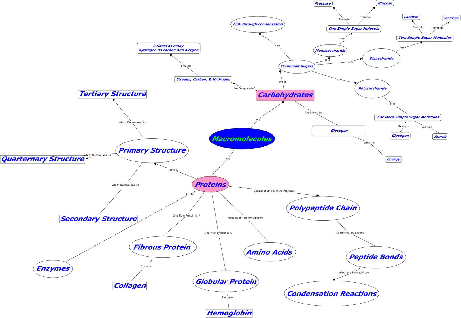 Kandace S Biology Blog My Concept Map Macromolecules