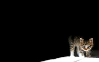 Sfondi di gatti per desktop gratis
