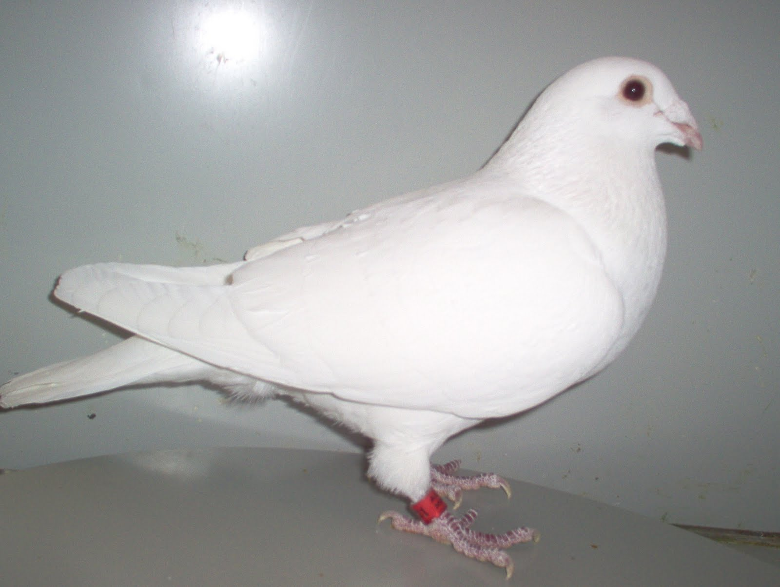 Pigeon forge craigslist personals