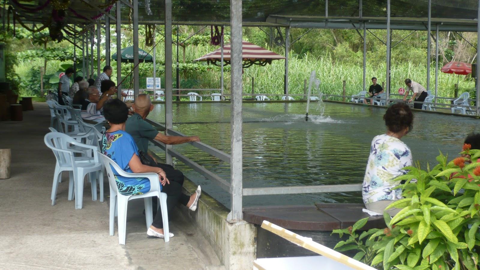 Singapore Local Tour: Farm Tour - Mainland Tropical FIsh Farm