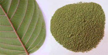 powdered kratom and kratom leaf