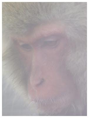El mono numero 100