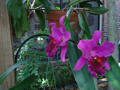 Some of my favorite orchids . .