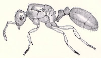 Esoscheletro di una formica