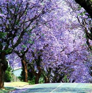 14 Ideas De árboles Esplendorosos árboles En Flor Arboles Jardines