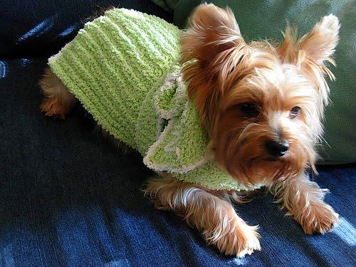 дрехи домашни животни