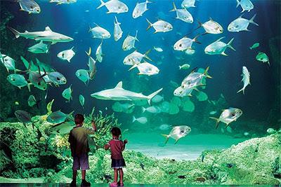Ornamental Fish Aquarium Creating The Best Aquarium In Your House