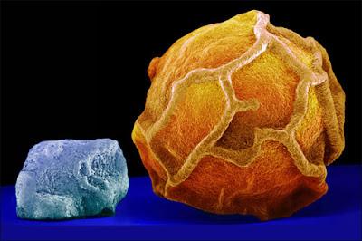 fotografia  en macro de un grano de sal y un gano de pimienta