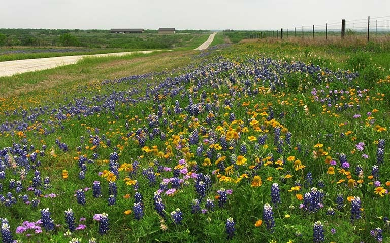 Fast Break Club On The Road Some Texas Wildflowers