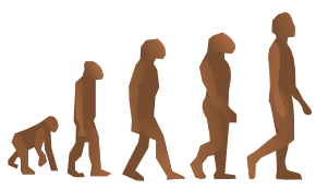 Evolution of Man in Stages
