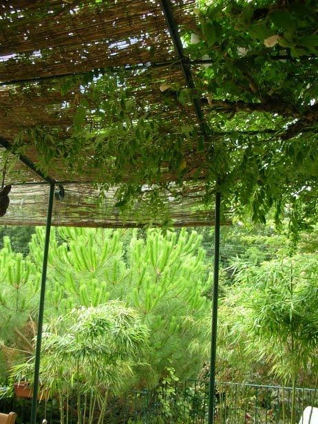 plantes des jardins et des chemins dans un jardin ami suite. Black Bedroom Furniture Sets. Home Design Ideas