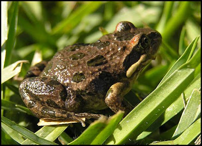 Hunter Valley Backyard Nature: #51 A summary of my ...