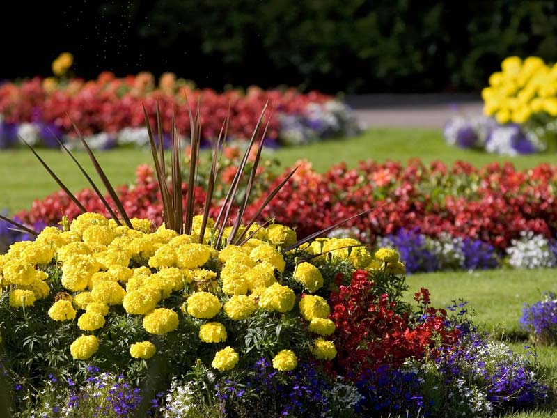 Flower gardens are like our souls