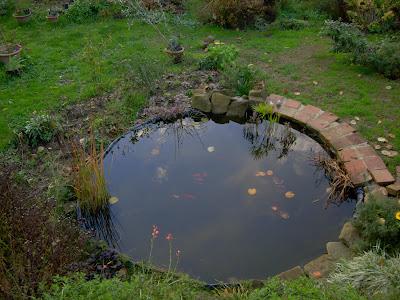 Iris e libellule fine novembre la vasca dei pesci rossi for Vasca giardino pesci