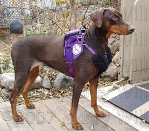 Servicedobe Rain Service Dog Equipment