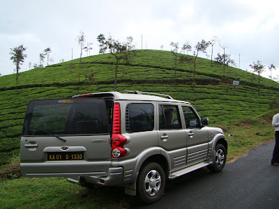 rear view amidst tea plantation