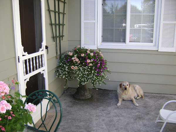 pooch porch