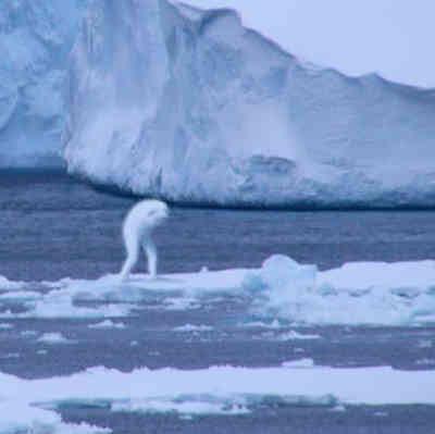 "Makhluk Antartika yang Menyerupai Manusia ""NINGEN"""