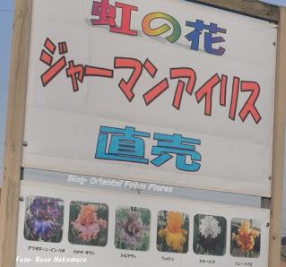fotografia de flores no Japão
