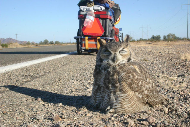 owl95 »