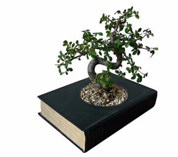 bonsai book planter